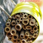 DIY Mason Bee House to Help Save the Pollinators!