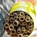 DIY Mason Bee House to Help Save the Pollinators!