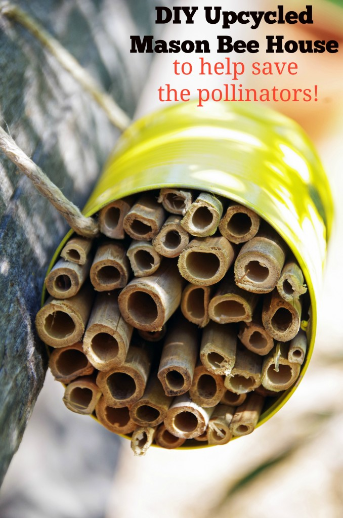 Easy DIY Mason Bee House to Help Save the Pollinators