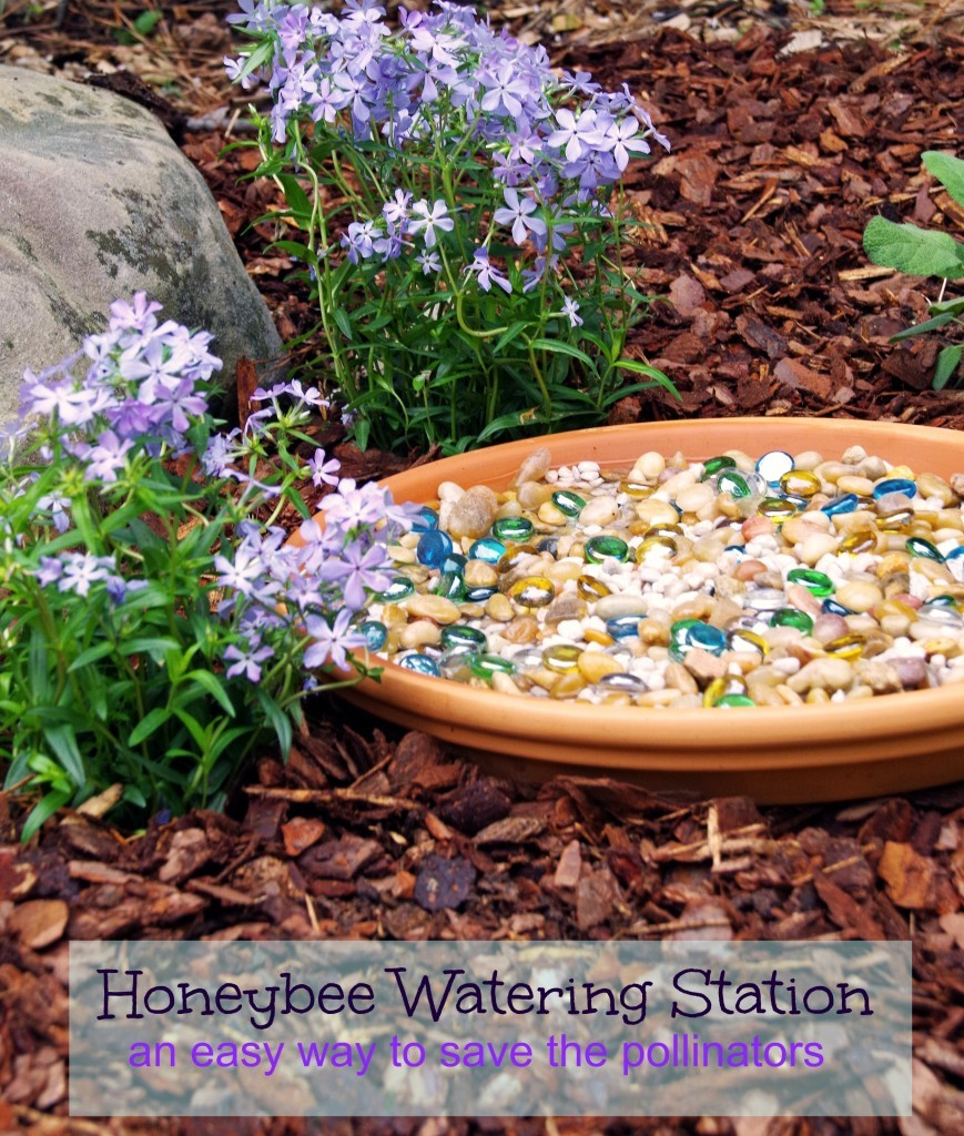 This easy honeybee watering station is an easy garden diy to help save the pollinators!