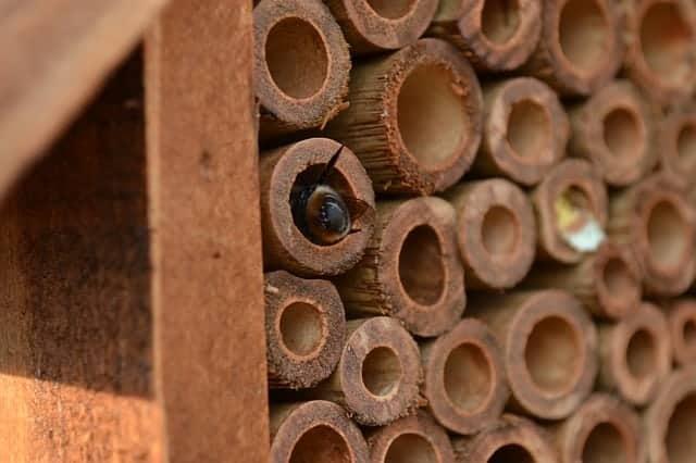 mason bee in mason bee house
