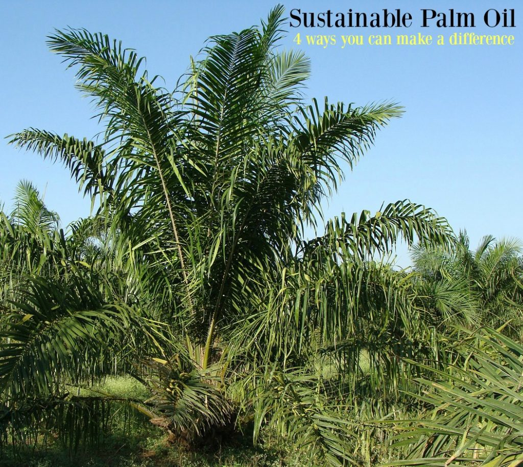 Choosing sustainable palm oil suppliers