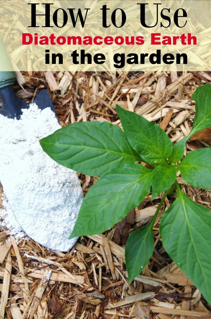 Tips for Using Diatomaceous Earth in the Garden