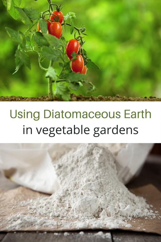 tomato plant and diatomaceous earth collage