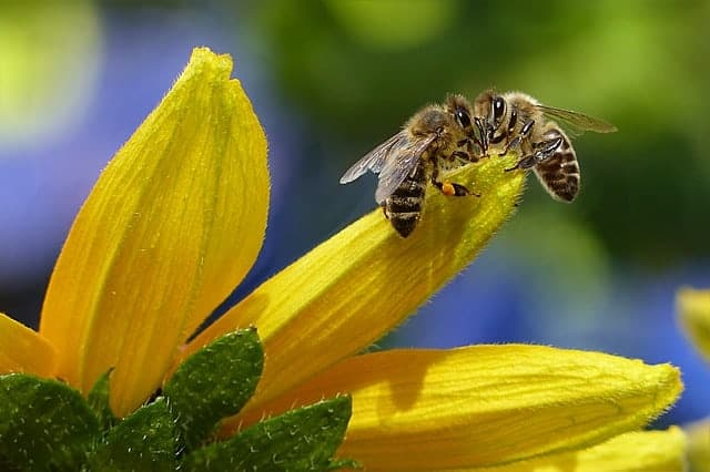 Is diatomaceous earth safe for bees?