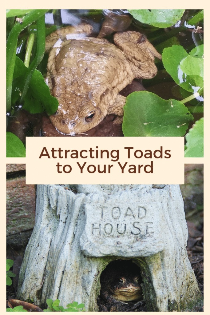 Attracting Toads to Your Yard
