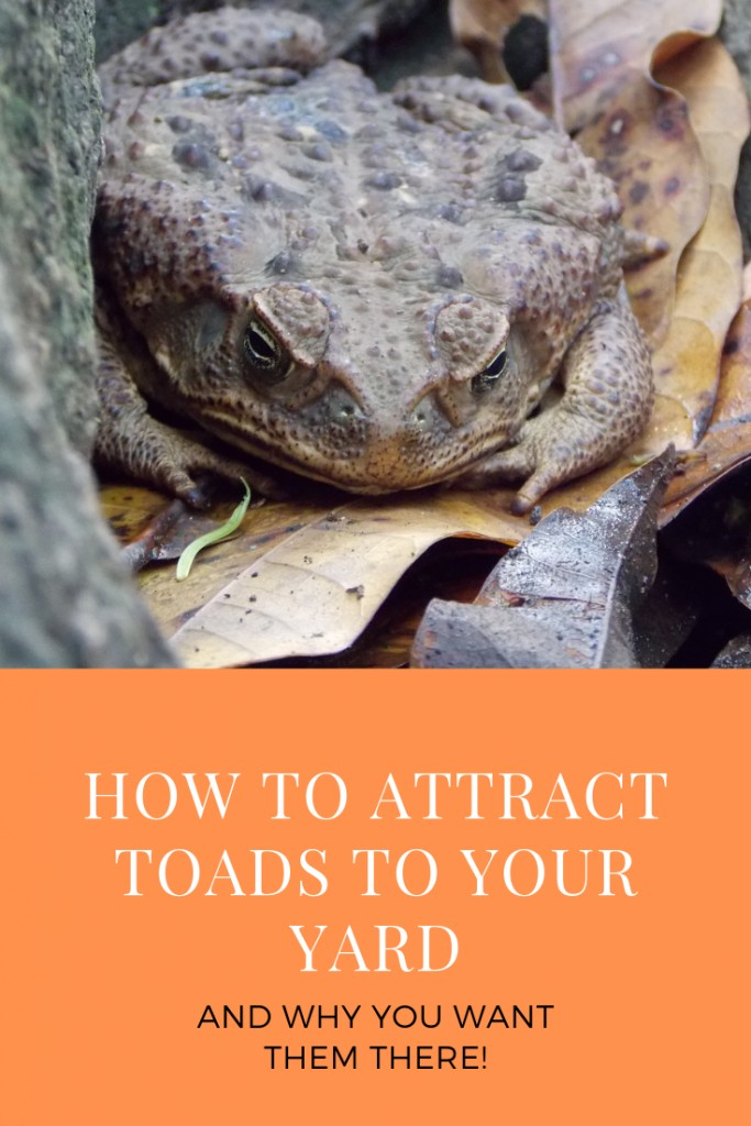 How to Attract Toads to Your Yard