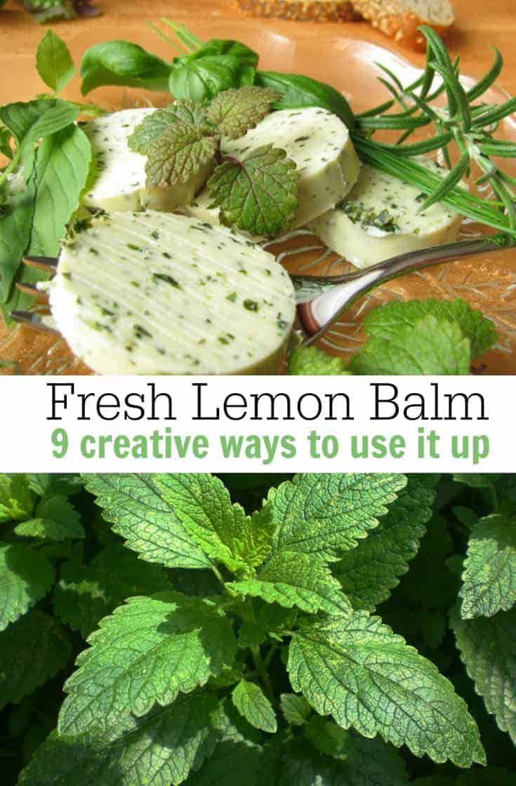 Love to grow lemon balm but not sure what to do with it? Here are a few creative uses for lemon balm when it starts to take over the garden!