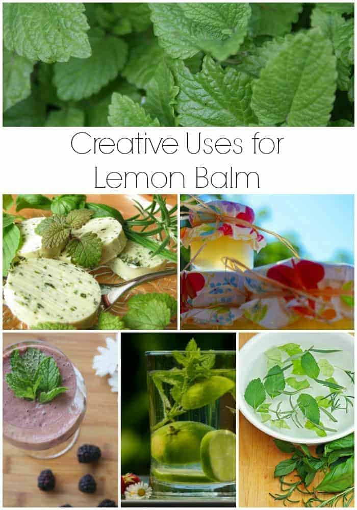 Creative Uses for Lemon Balm When it Takes Over the Garden!
