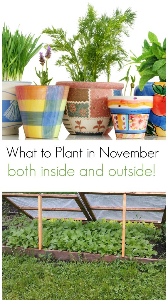 What to plant in November, both inside and outside!