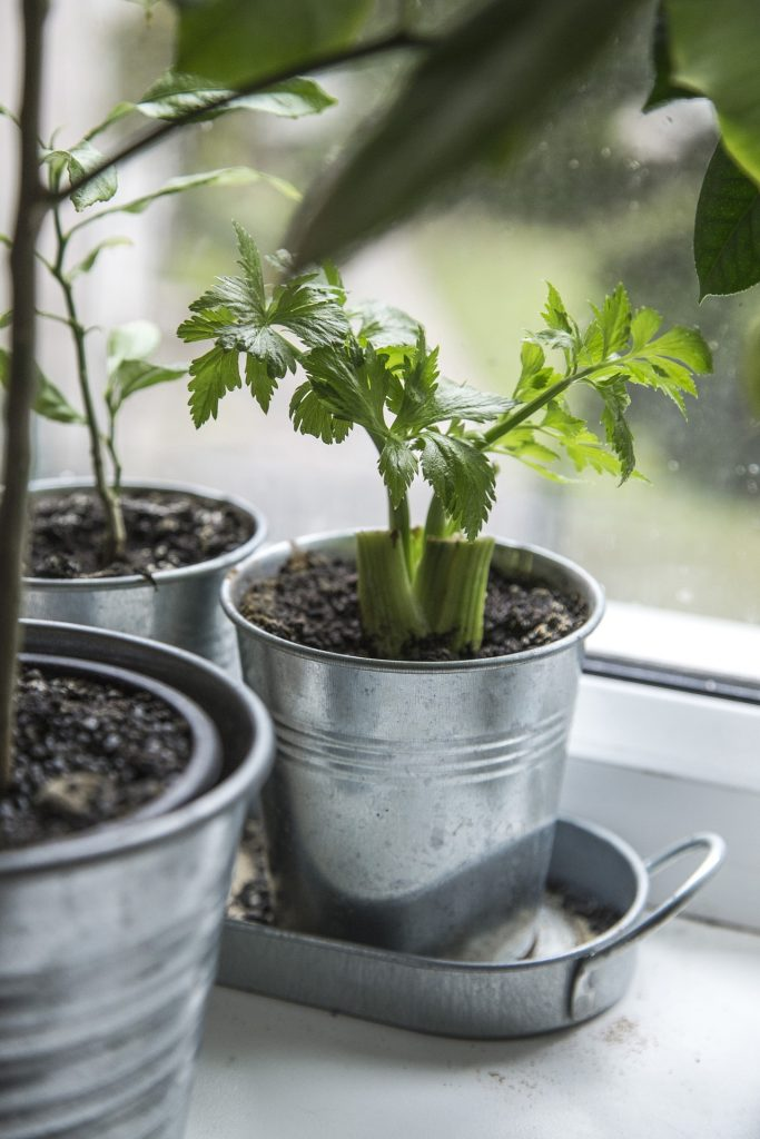 Foods You Can Re-Grow Yourself from Kitchen Scraps