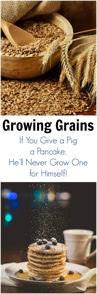 Growing Grains and If you give a pig a pancake, he'll never grow one of his own!