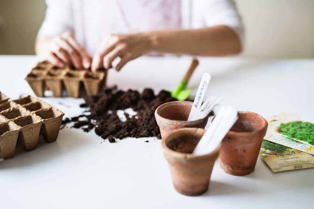 person planting seeds in pots inside