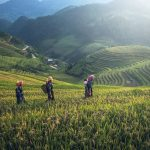 The 5 Most Organic Countries to Live Green and Showing Support for Organic Food
