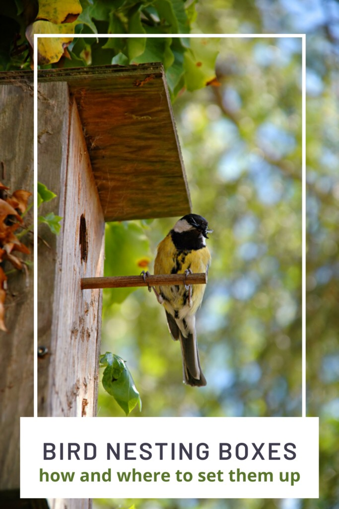 Bird Nesting Boxes and tips for setting them up