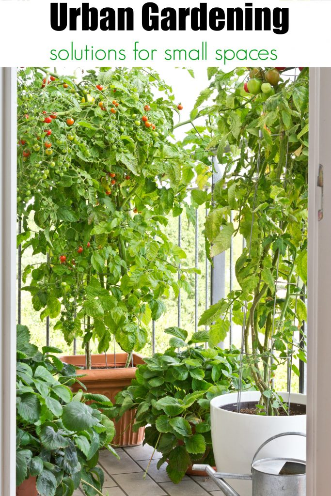 Urban Gardening Ideas And Solutions For Small Spaces