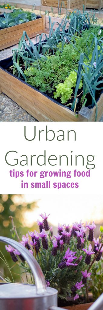 Urban Gardening Ideas for Small Spaces