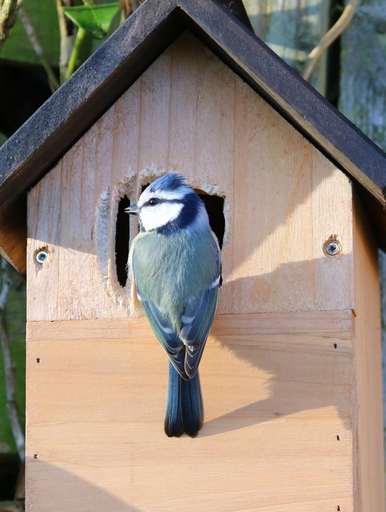 Tips for Adding Wild Bird Nesting Boxes to Your Yard