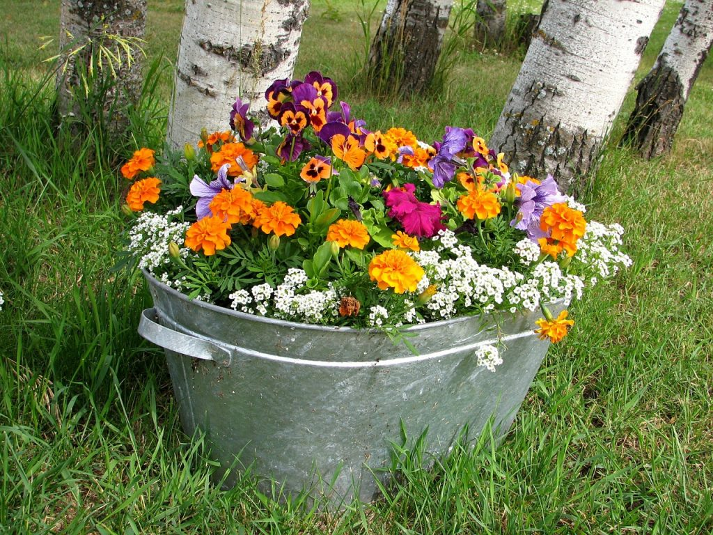 Growing Annuals In Pots Follow These Tips For Beautiful Flowers