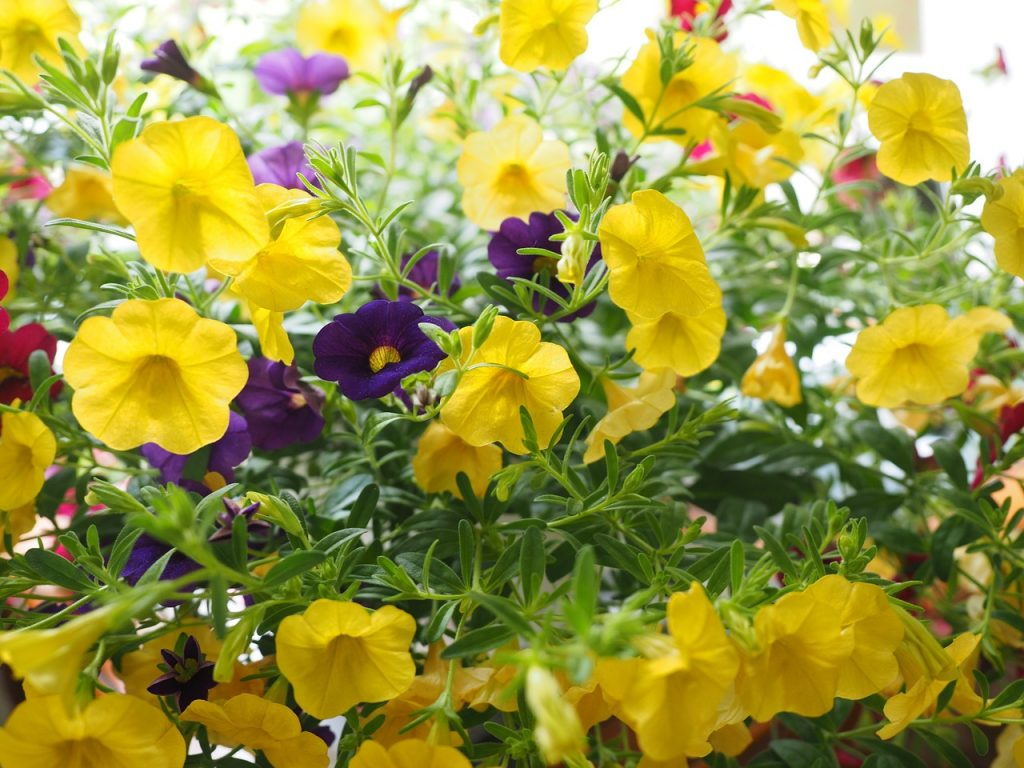 Choose the Best Annuals for Flower Pots