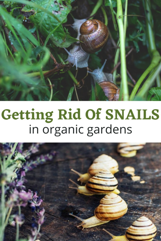 collage of snails in the garden