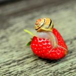 How to Keep Snails out of the Garden