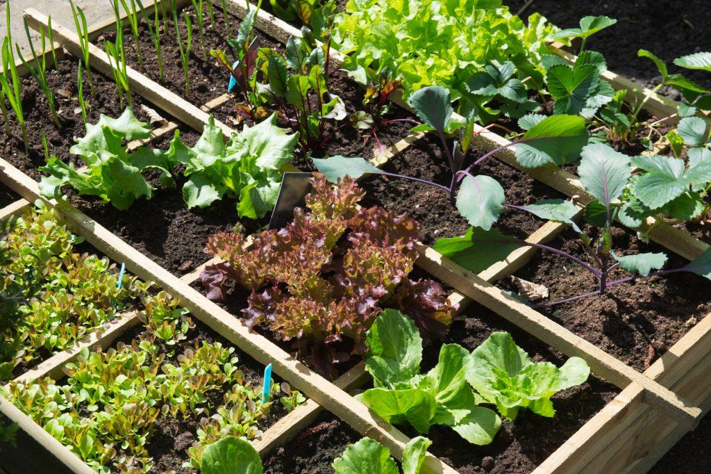 Square Foot Gardening Tips for Maximum Yield