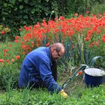 Best Natural Weed Control and a New Way to Look at Weeds!