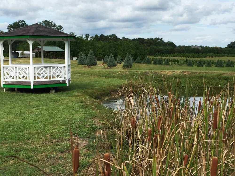 How to Support Local Farmers and my Georgia Agritourism Experience