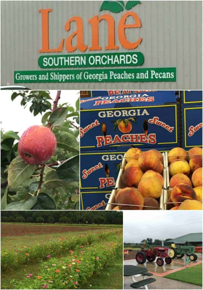 Lane Southern Orchard, How to Support Local Farmers and my Georgia Agritourism Experience