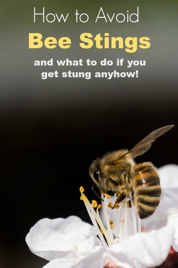 How to Avoid Bee Stings