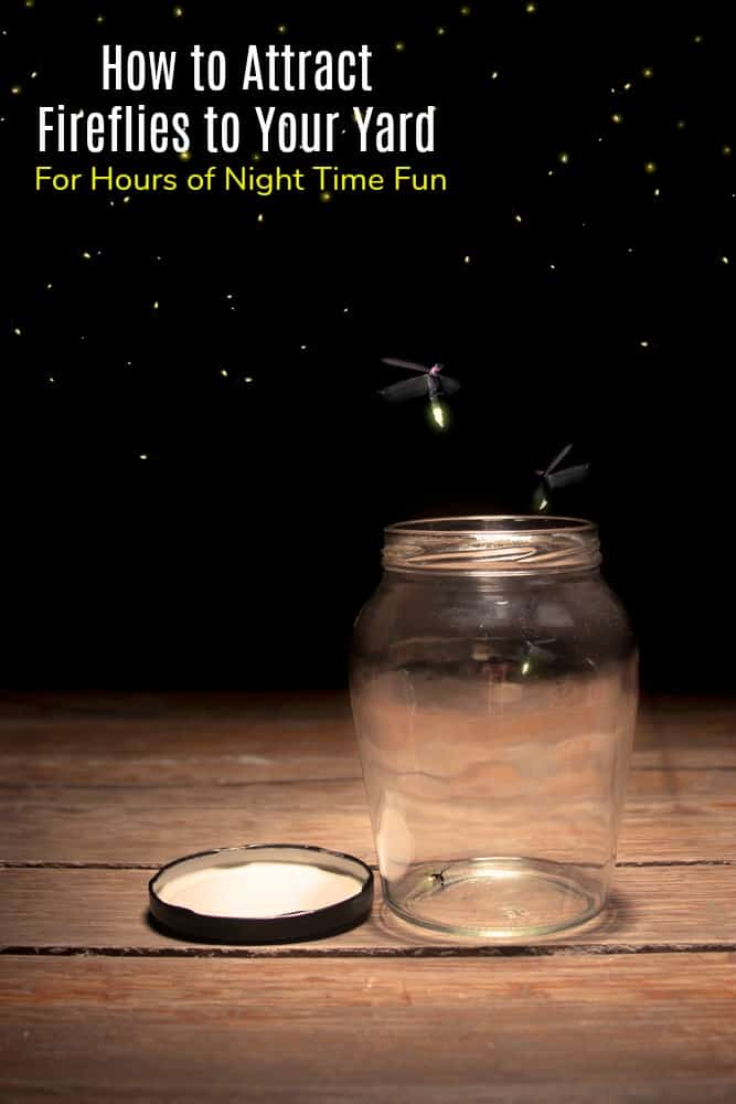 How to Attract Fireflies to Your Yard for Hours of Night Time Fun