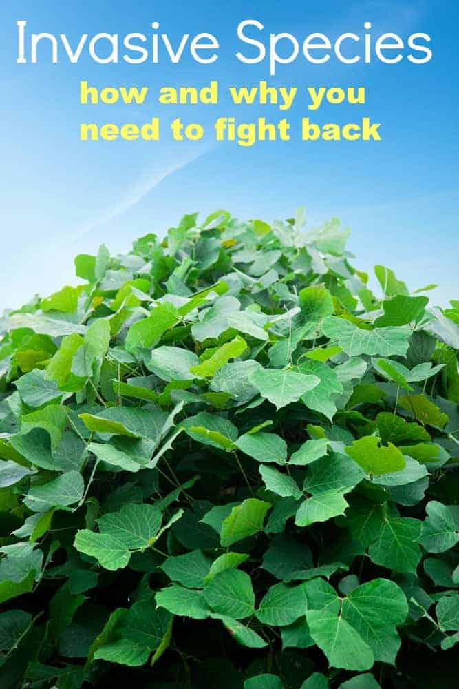 Invasive Species Control and how to become a weed warrior