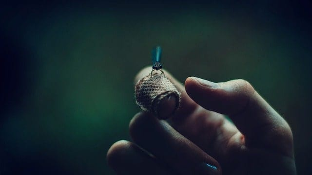 firefly on a finger