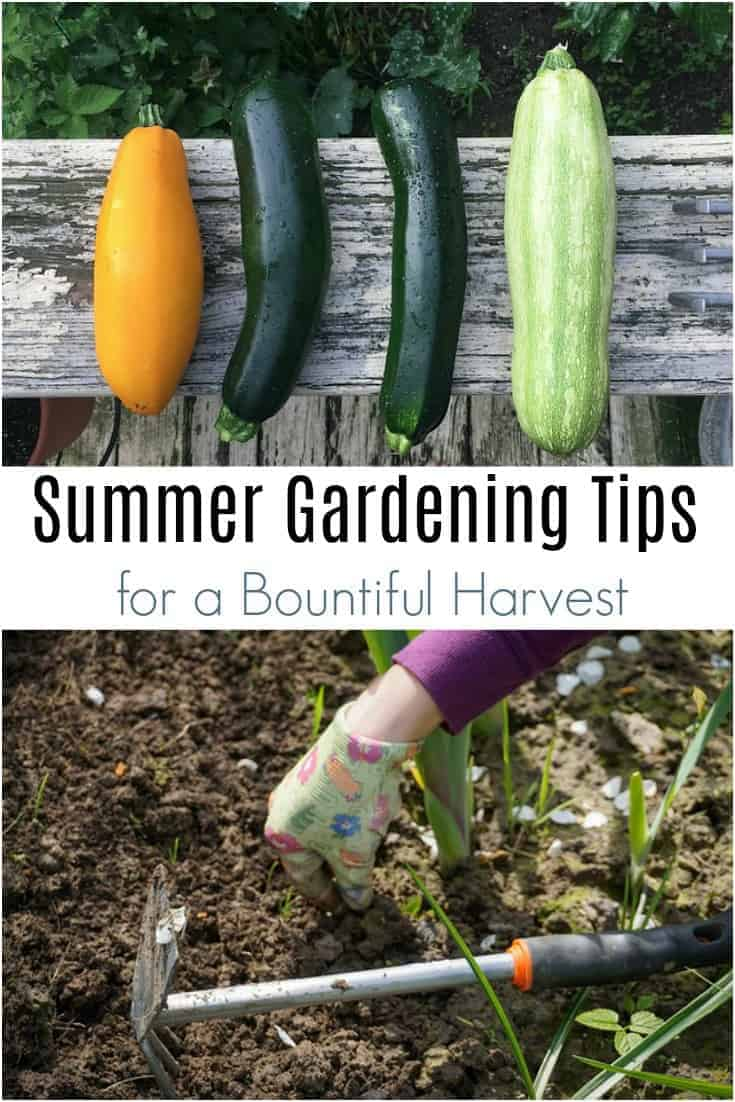 Want a bountiful harvest from your summer garden?  Read this summer garden checklist!  These easy summer gardening tips will help you grow more summer produce!