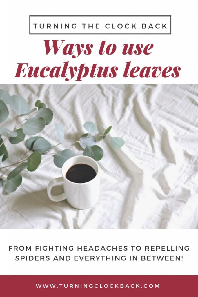 Fresh Eucalyptus Uses and Growing Tips