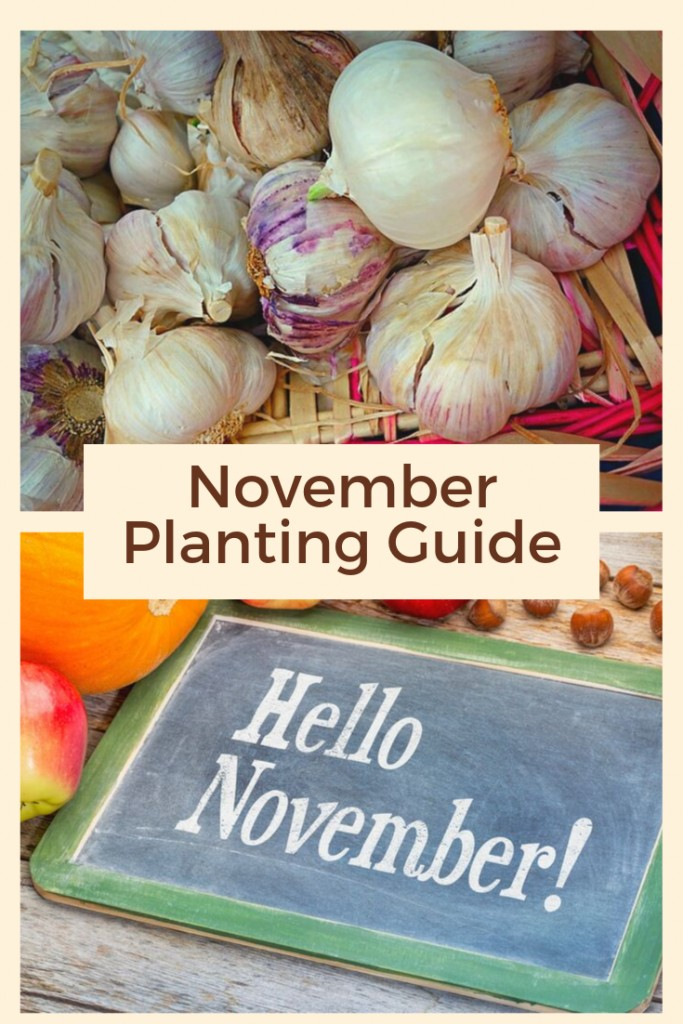 November Planting Guide