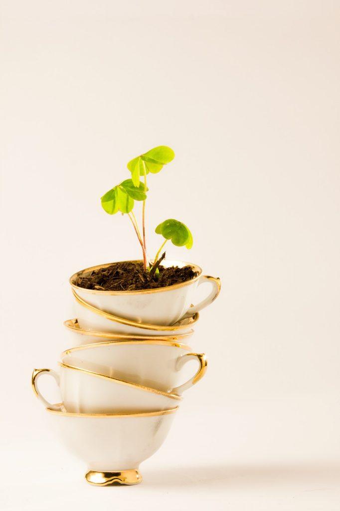 tea and plant