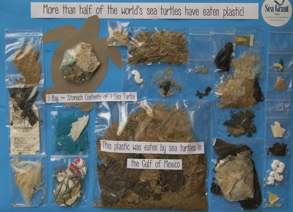 display of plastic pollution eaten by sea turtles