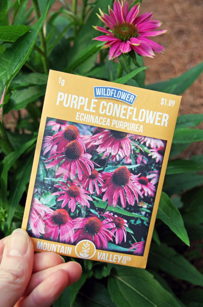 Purple cone flower with seed packets