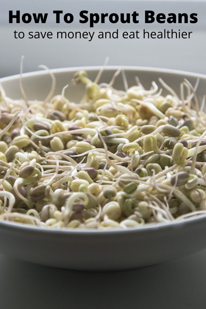 white bowl of mung bean sprouts