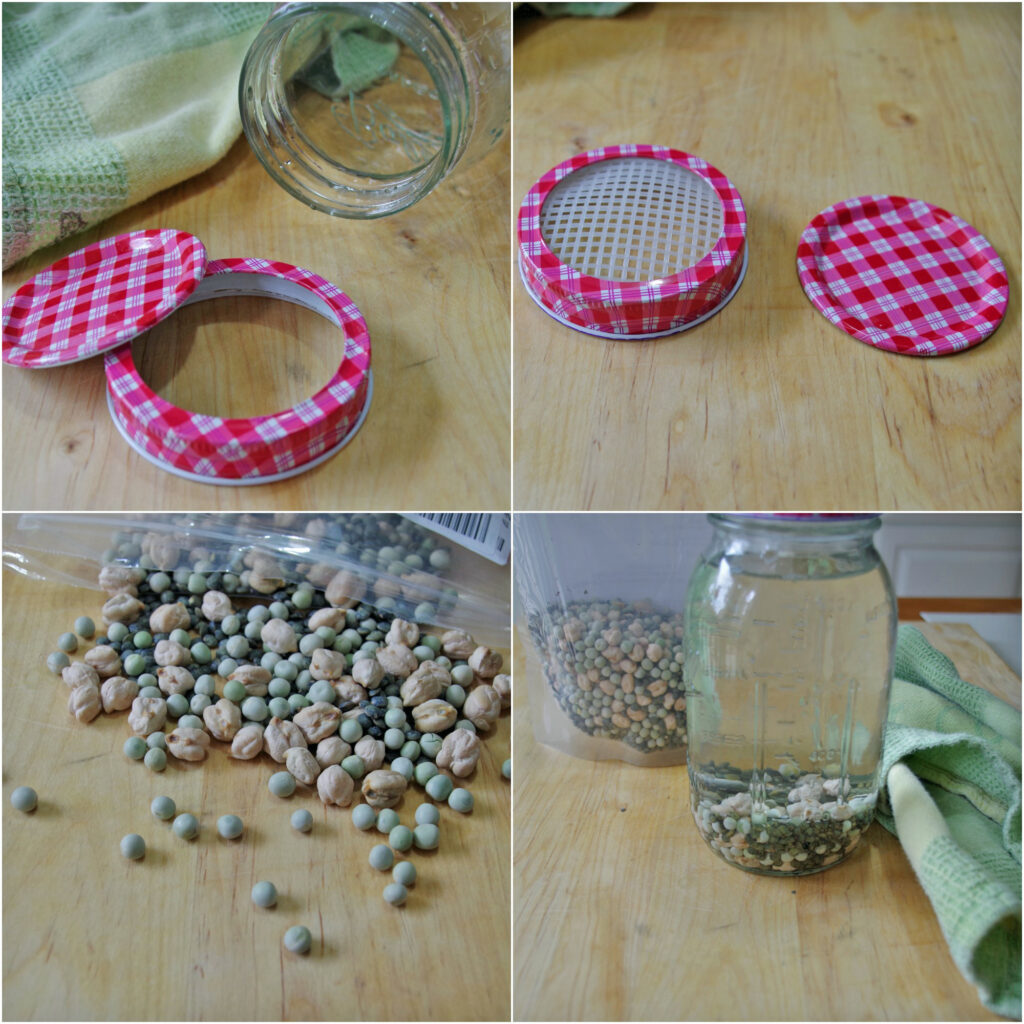 collage of images of dried beans in glass mason jar with water for sprouting